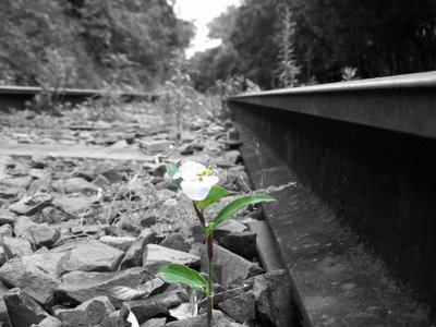 Superar las dificultades y aumentar la resiliencia: hoja de ruta completa