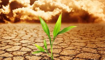 Qué es Crecimiento postraumático